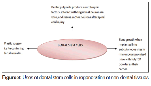 Applications of Stem Cells in Interdisciplinary Dentistry and Be