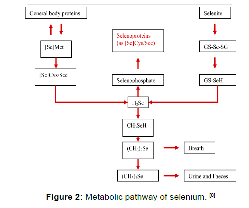 annals-medical-health-sciences-selenium